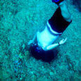 Free diving adventures