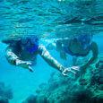 Oahu Snorkel Tours